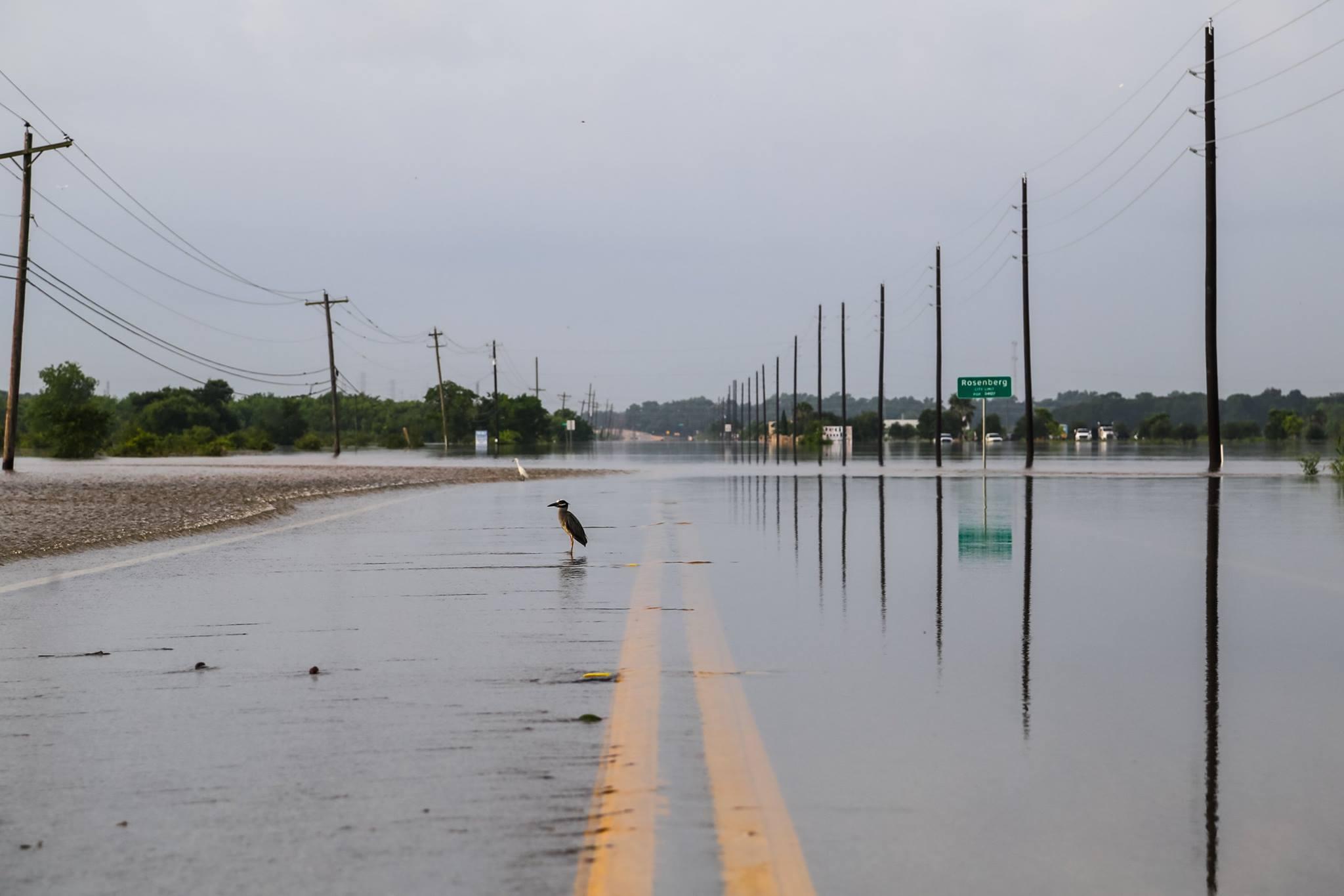 memorial flood 2016
